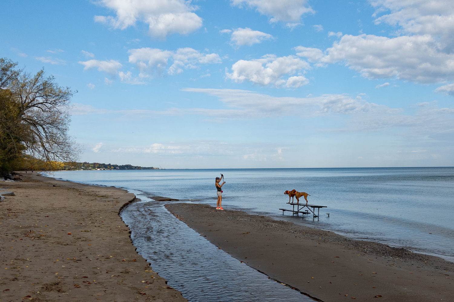 Woman posing her two dogs on picnic table in Lake Ontario