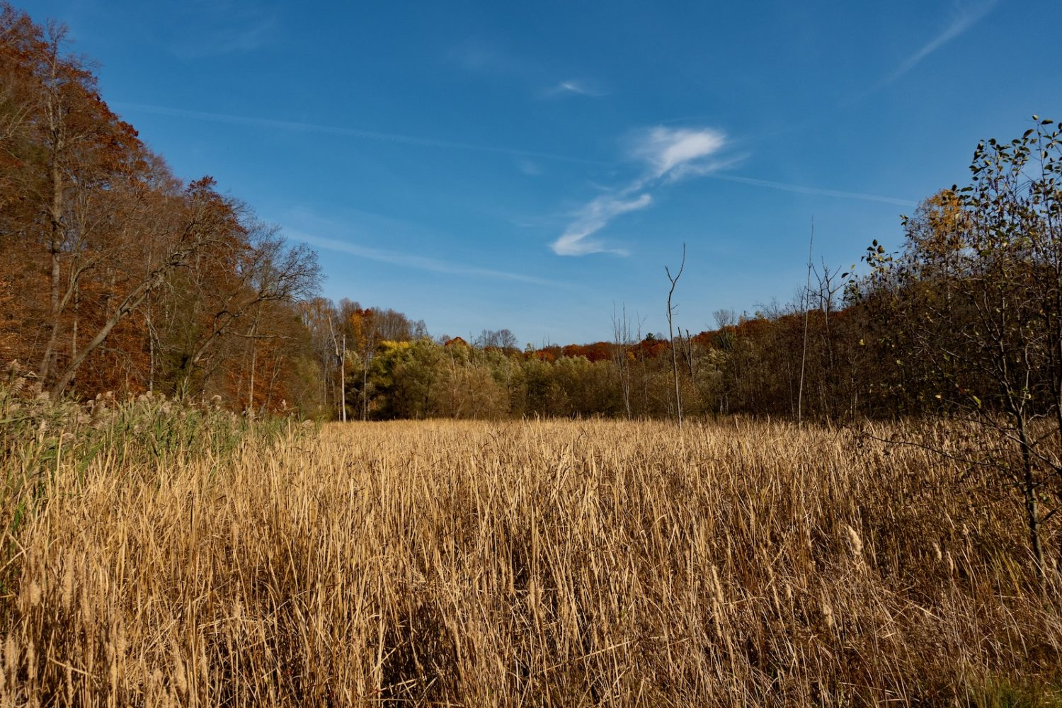 Hoffman Road marsh in November
