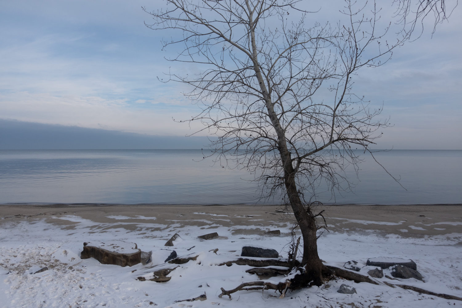 Bare tree on beach with snow, Durand Eastman.