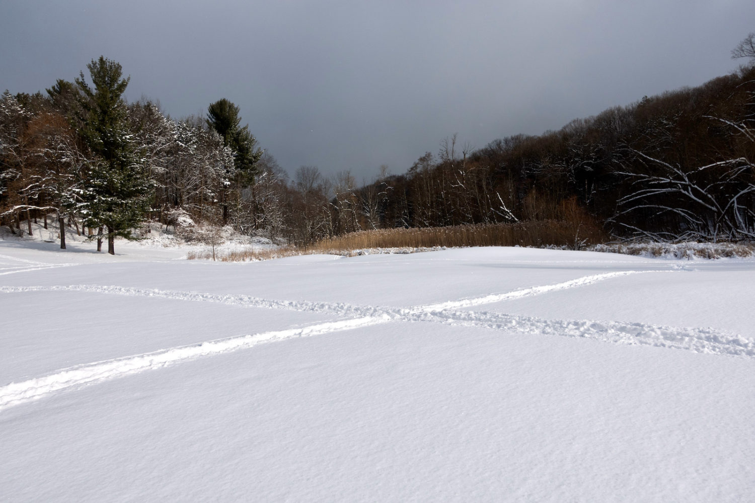 Cross country ski X-pattern in snow at Durand Eastman