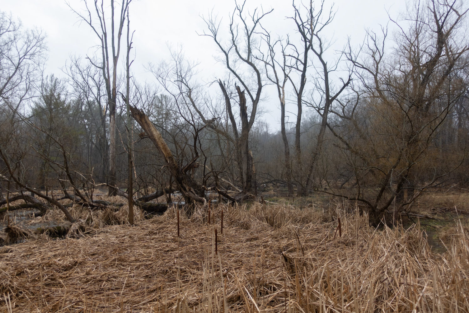 Marsh on Hoffman Road in late March