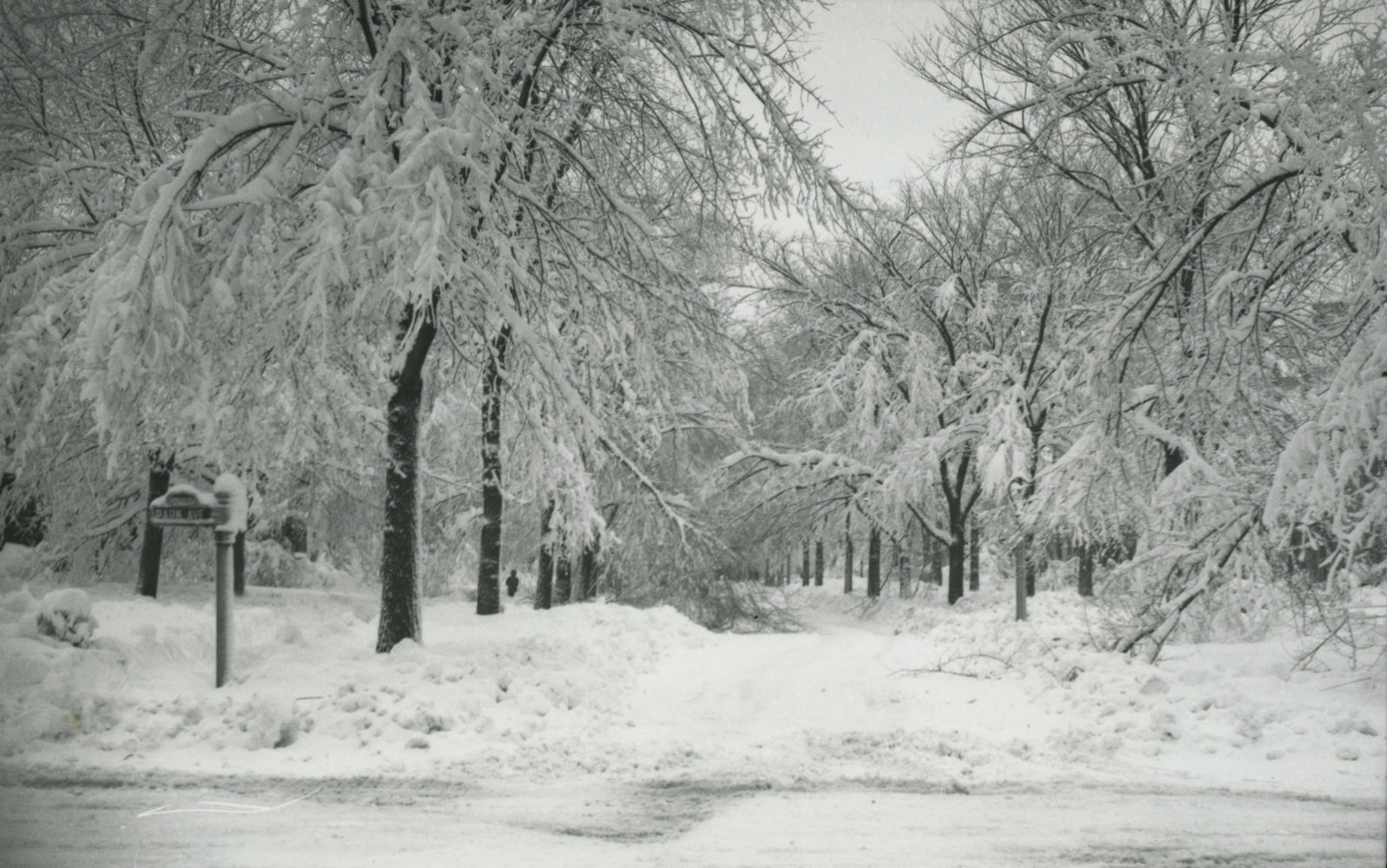 Park Avenue after snow storm in 1945 – photo from City of Rochester