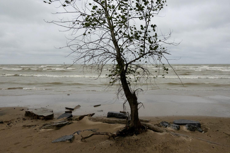 Scraggily tree at Durand Eastman beach