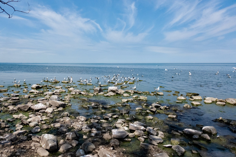 Sea gull along beach at Nine Mile Point