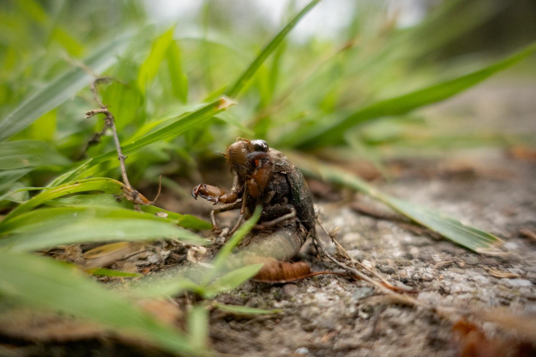Cicada near the pool