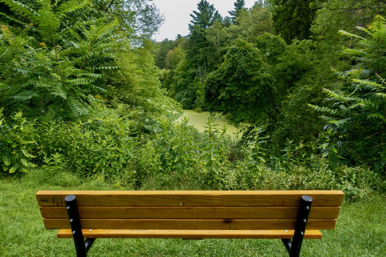 Bench overlooking Trott Lake in Durand Eastman Park